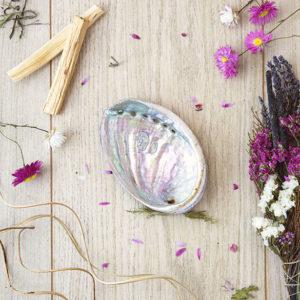 Abalone de Bretagne Plumes de Gaïa